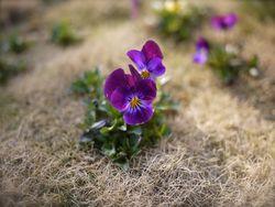 春の息吹!