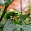 "Frog in Garden • <a style=""font-size:0.8em;"" href=""http://www.flickr.com/photos/37169974@N03/3911538478/"" target=""_blank"">View on Flickr</a>"