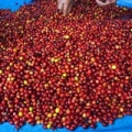 """Honduras 2014 Coffee Hunting Tour, Magnolia Coffee Roasters • <a style=""""font-size:0.8em;"""" href=""""http://www.flickr.com/photos/37169974@N03/13346957523/"""" target=""""_blank"""">View on Flickr</a>"""