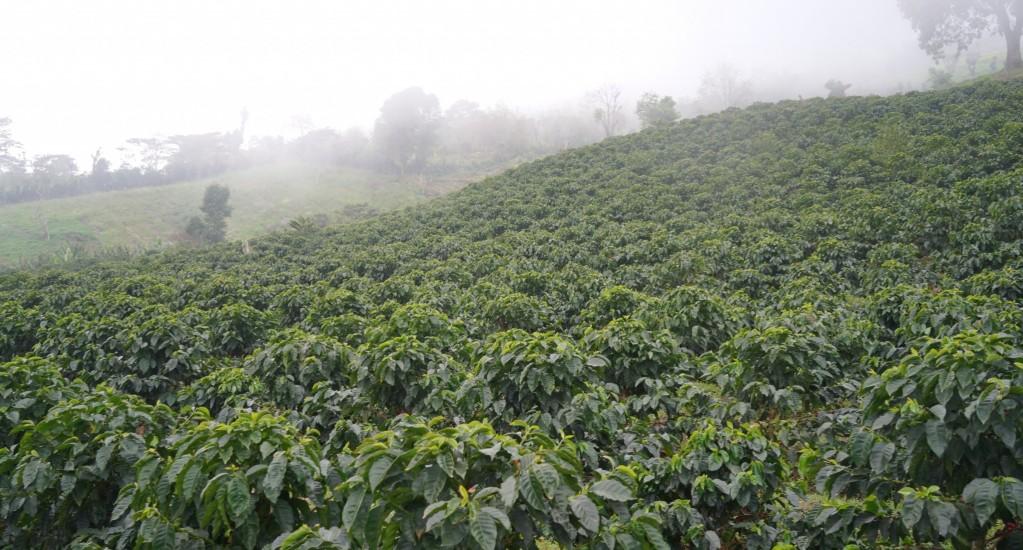 コーヒー豆 素材調達の旅 ホンジュラス編 ④