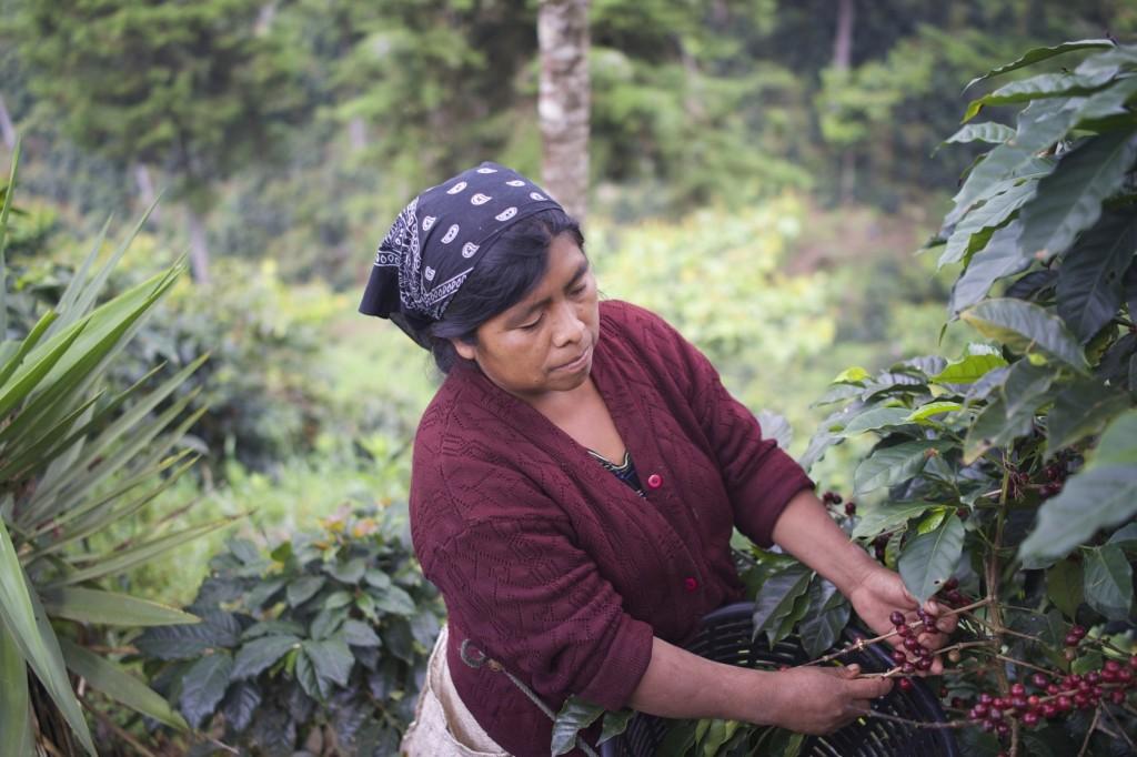 コーヒー生産国訪問 グアテマラ ウエウエテナンゴ