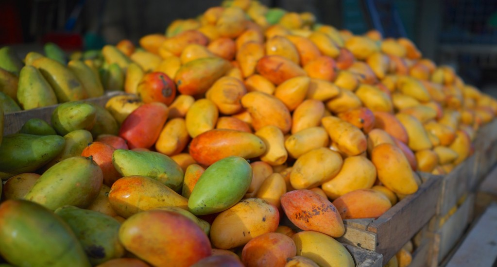 コーヒー豆 素材調達の旅 グアテマラ編 ④