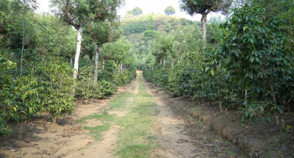コーヒー豆 素材調達の旅 グアテマラ編 ⑧
