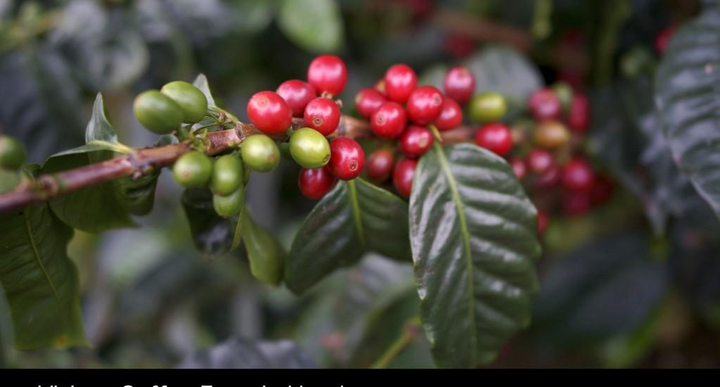 デジタルコンテンツ を始めます!まずはコーヒー生産国のデジタルフォトブックから