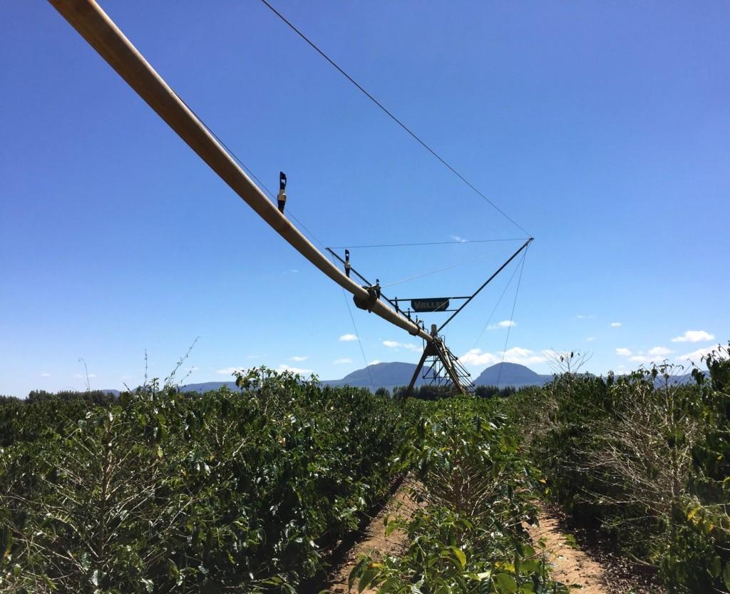 ピボット(灌漑設備)を持つ大規模農園。