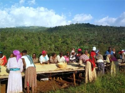 ETHIOPIA イルガチェフェ コチェレ