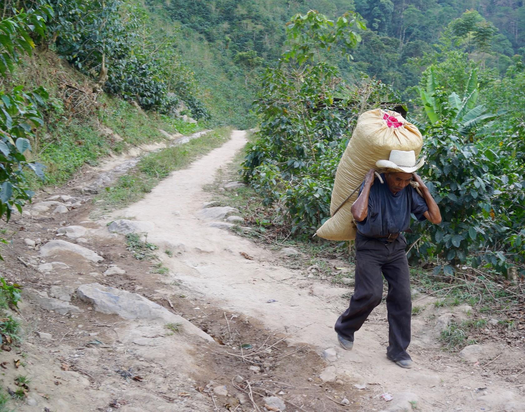 スペシャルティコーヒー素材買付の旅 2016 グアテマラ